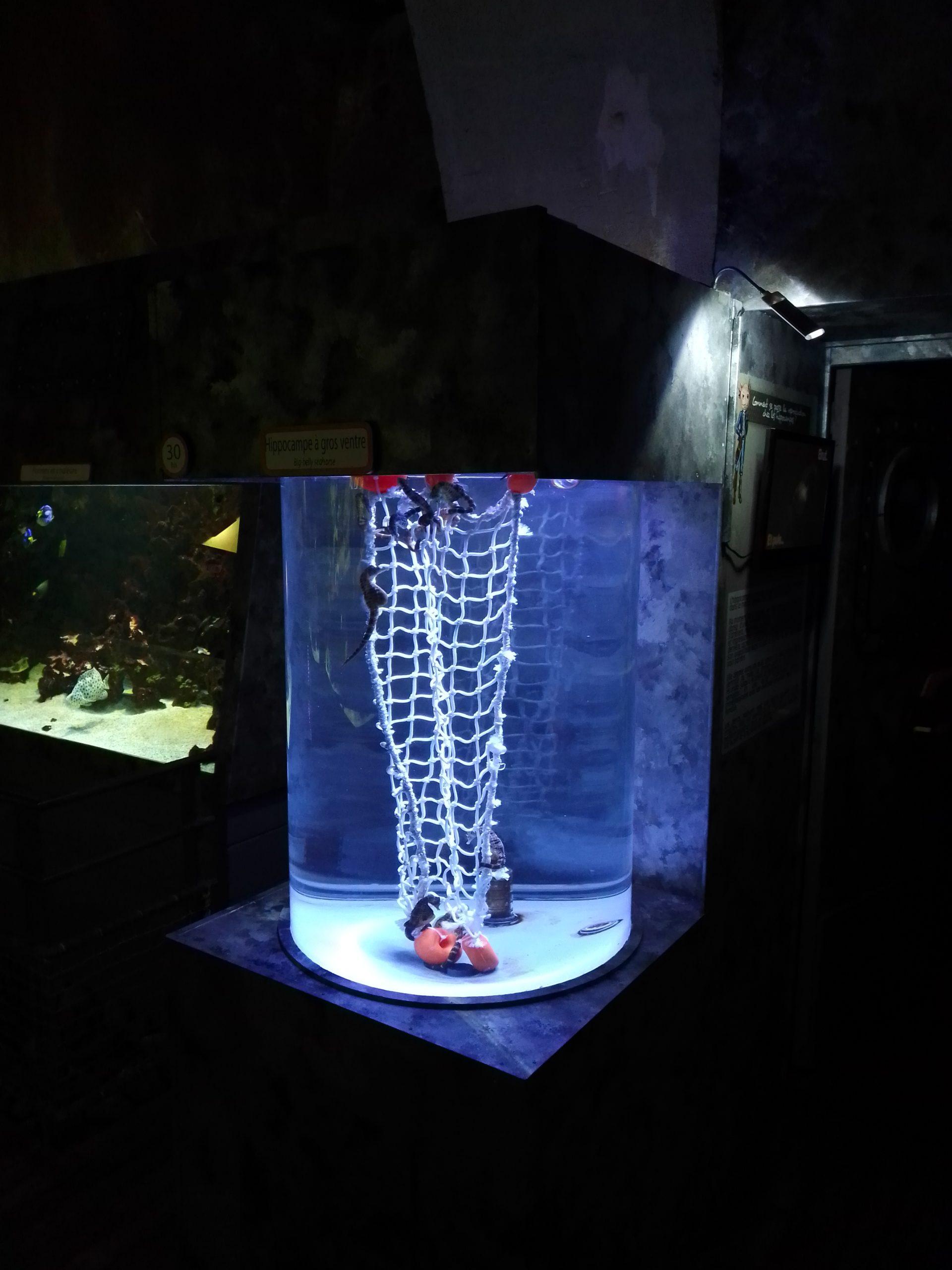 Tube aquarium sur mesure